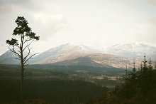 View over Forest and Mountains
