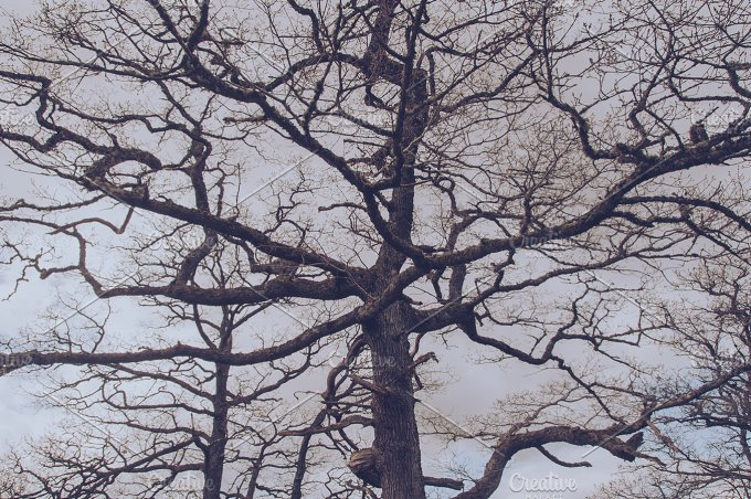 Magical Tree.jpg - Nature