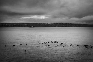 Vancouver Birds