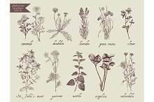 Medical herbs set. Hand drawn design.