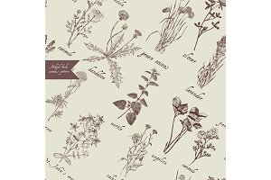 Medical herbs seamless pattern. Hand drawn vector.