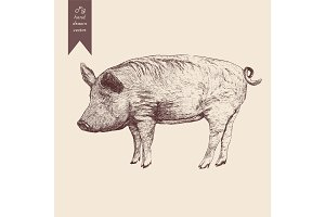 Vector illustration of a pig. Hand drawn. Vintage style.