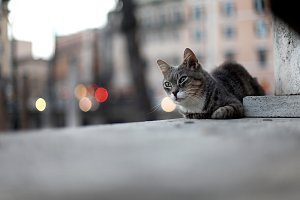 Sad street cat lying on the ground