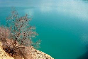 Elegant bush on emerald lake