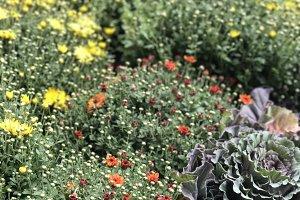 Plants + Nature V1
