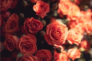 Natural red pink roses flower bouquet background