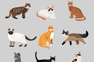 cute cartoon kitties or cats