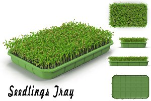 Seedlings Tray # 1