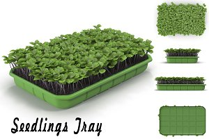 Seedlings Tray # 2