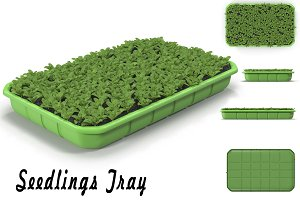 Seedlings Tray # 3
