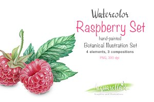 Raspberry SET- detailed watercolor