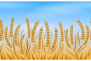 Field of wheat landscape background