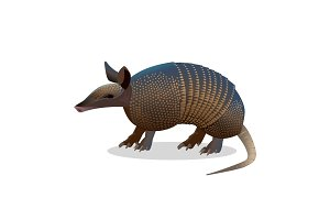 Armadillo isolated. Realistic placental mammal with leathery armour shell.