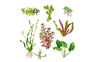 Aquarium plants set. Cartoon underwater algae. Seaweed natural elements.