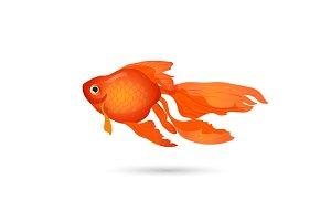 Goldfish isolated on white. Small red aquarium fish.