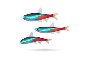Tropical aquarium fish on white background. Neon marine inhabitants