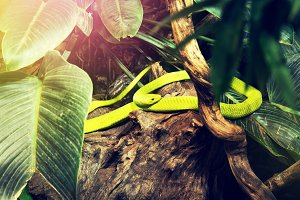Green wild snake in zoo