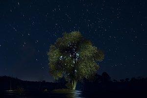 Illuminated night tree
