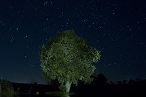 Lonely tree at night