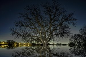 Night scene of a tree