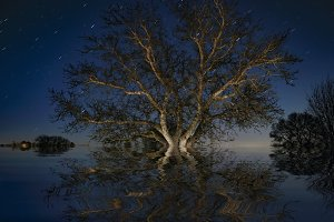 The tree  under the stars