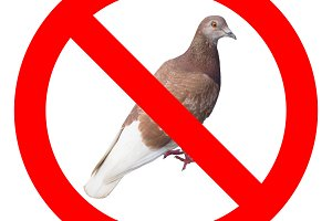 No pigeons sign
