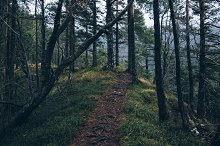 Path in the Forest / Woods
