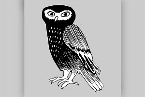 Hand drawn doodle of the owl.