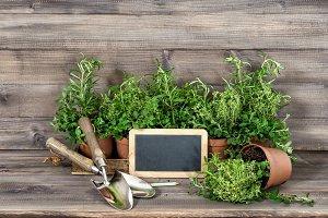 Kitchen herbs with chalkboard