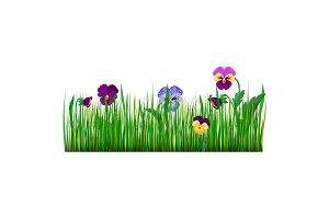 Pansy flowers violet bloom garden plant vector illustration.