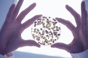 Researcher hands holding sprouts in petri dish