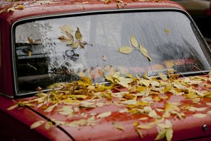 Leaves on the car