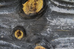 Distressed Wood Texture