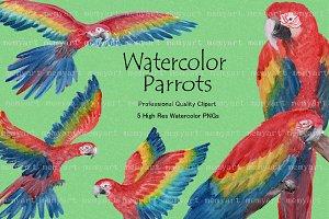 Parrot - Waterolor Parrots