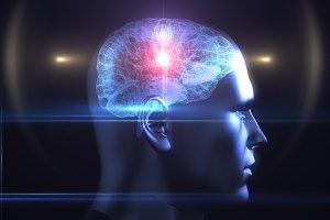 Brain diagram in human head