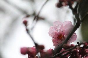 Spring has sprung.