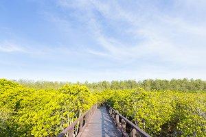 Bridge walkway in mangrove forests.