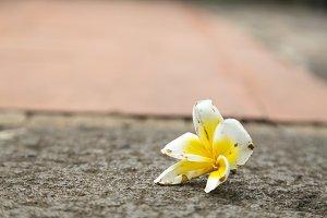 White flower that fall on the floor.