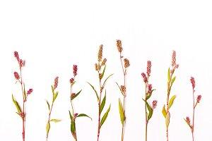 Flower patter