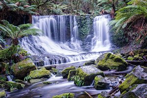 Secluded waterfall in tropical rainforest. Horseshoe Falls in Mount Field National Park, Tasmania, Australia