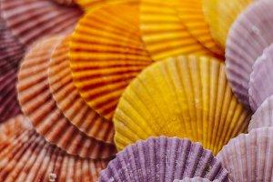 Colorful seashells background