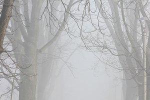 People walking in the fog
