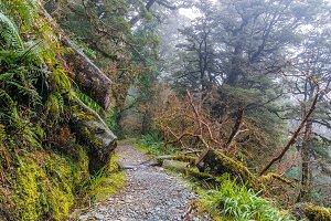 Beautiful rainforest of New Zealand