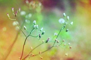 Little ironweed