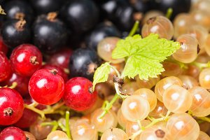 Currants types