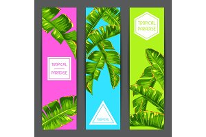 Banners with banana palm leaves. Decorative tropical foliage