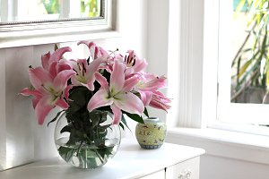 pink lillies by the window