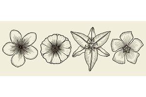 Flowers sketch set