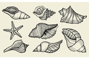 Seashells hand drawn set.