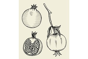 Pomegranate hand drawn illustration